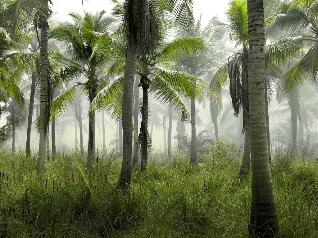 Arbres replantés, replantez 10 arbres